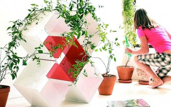 white-cross-plants