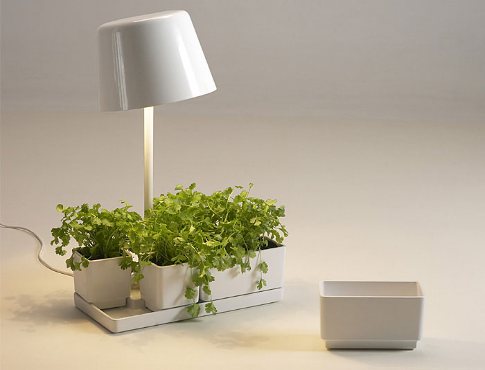 Imu Design Collective plantlight imudesign