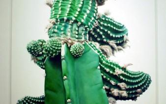 art-cactus