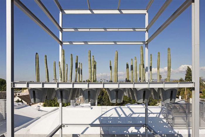 Cactus Tower cactus garden