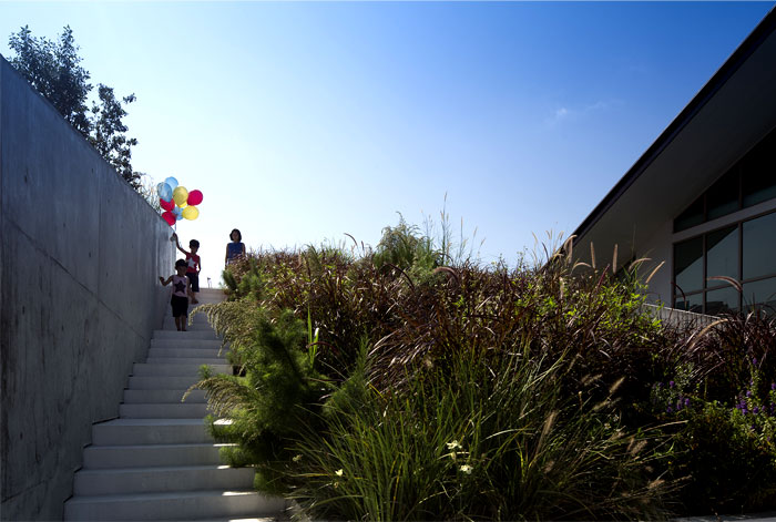wild-landscape-terracing-rooftop