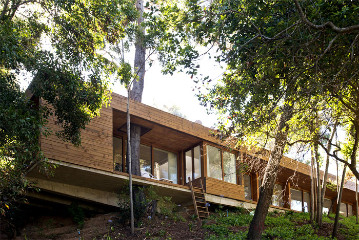 contemporary-pavilion-forest