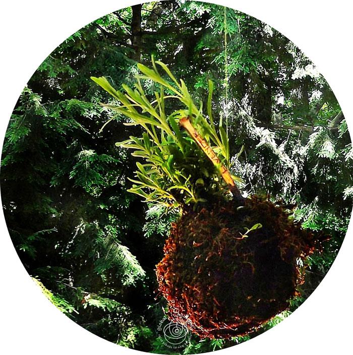 global-gardens-4