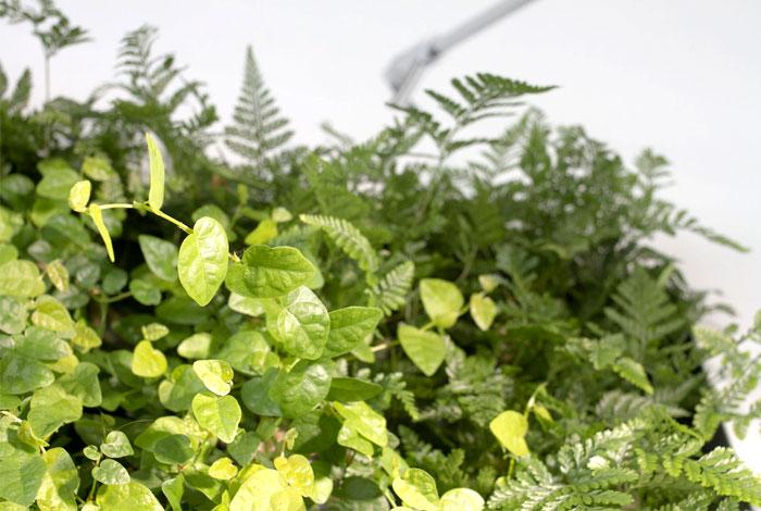 vertical-vegetable-gardens-sundar-italia-5