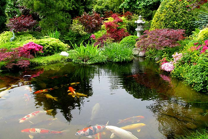 Zen gardens asian garden ideas 68 images interiorzine for Japanese garden with koi pond