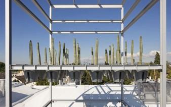 cactus garden 338x212