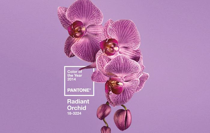 color-trend-purple
