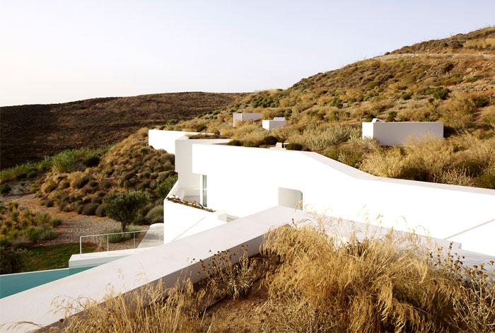 vegetation green roofs