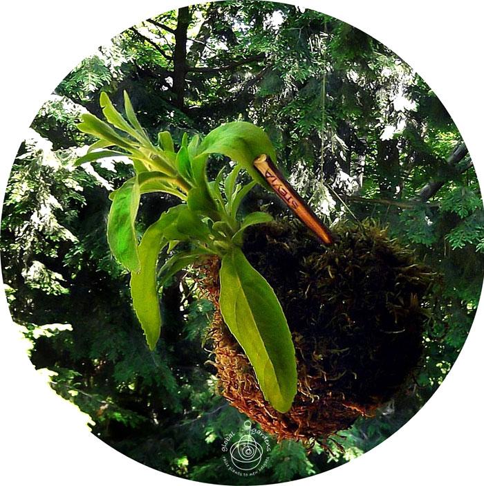 global-gardens-2