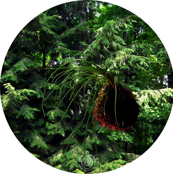 global-gardens-5