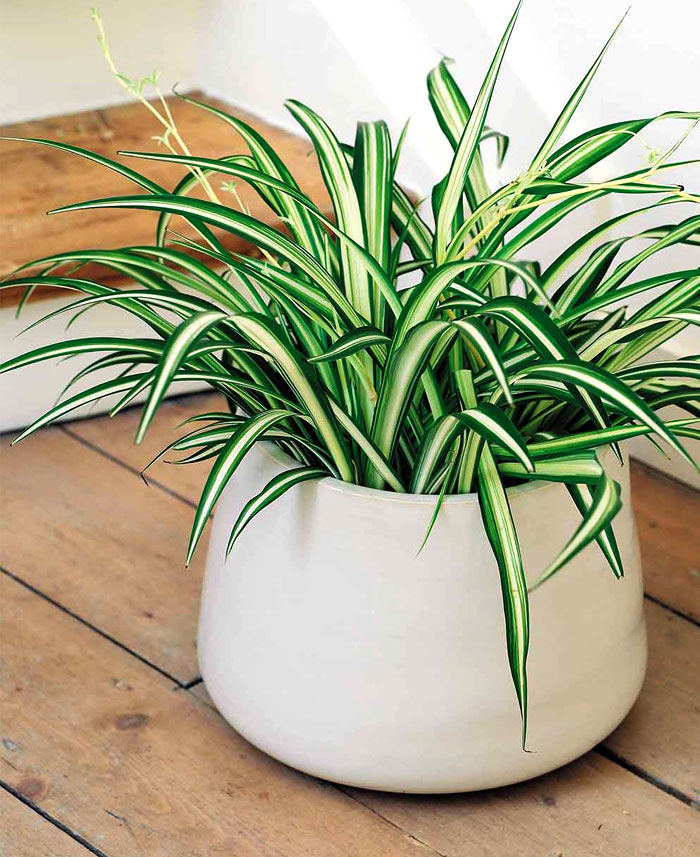 plants-decorate-modern-bath-greenery-25