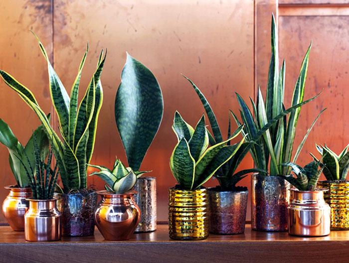 plants-decorate-modern-bath-greenery-28