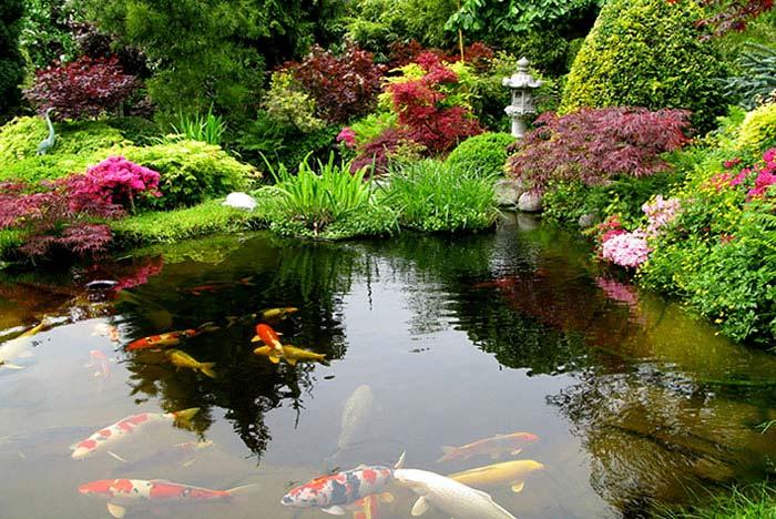 asian garden koi fish pond