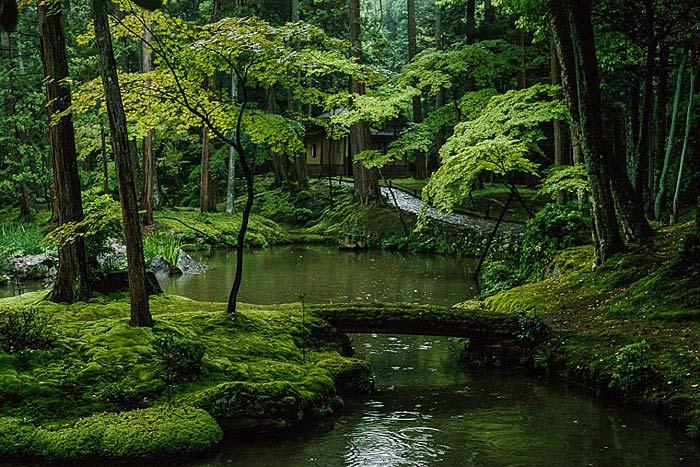 asian style moss garden idea