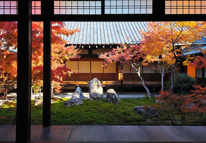 japanese maple acer palmatum asian style garden