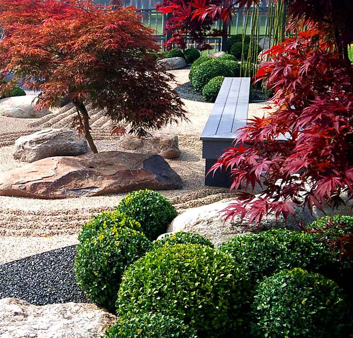 modern japanese style garden with red maple