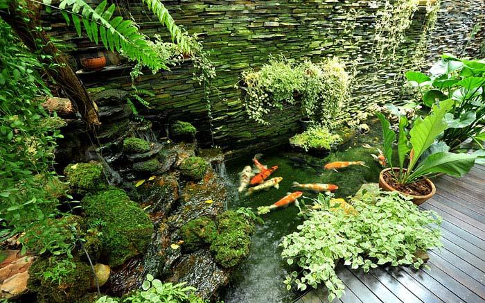 small asian garden koi fish pond