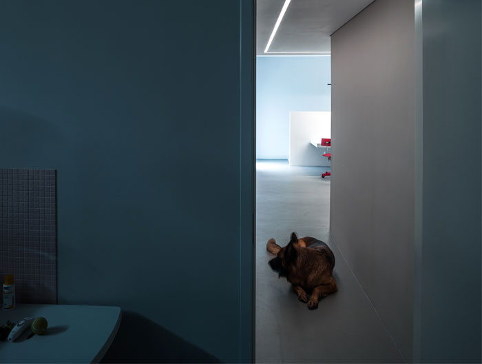 dog house aboutarch 17